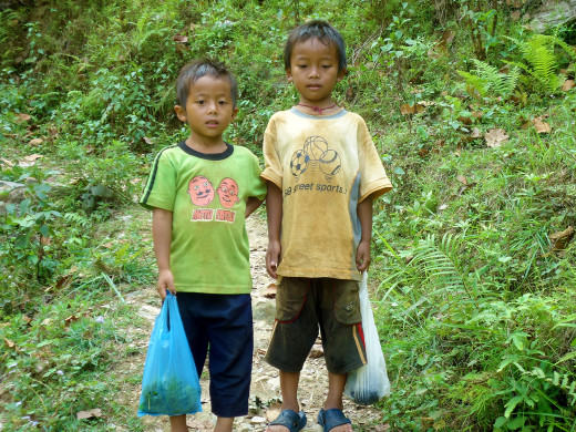 kids collecting vegetable in leisure